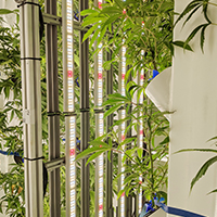 STEM-Cultivation-Preview-Image-Webinar